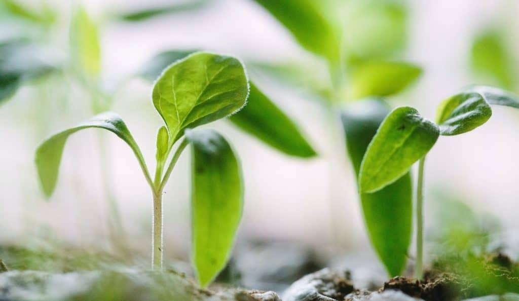 Photo d'une plante qui grandit